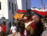 [Festive Camel]