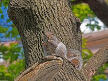 [Squirrel with Peanut]