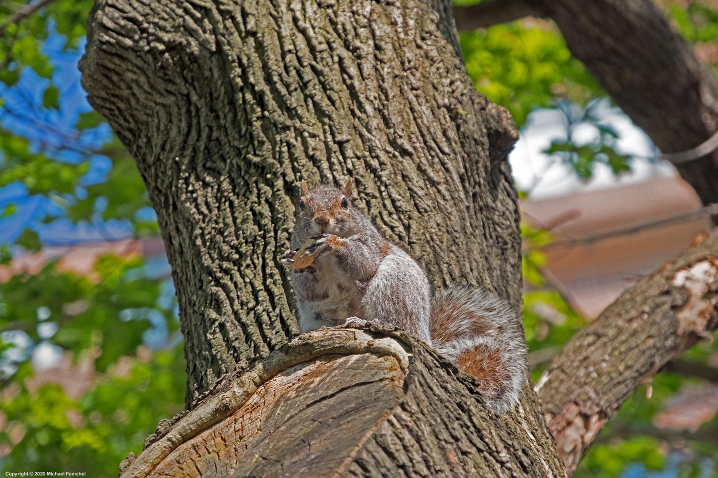 Squirrel - Sometimes You Feel Like a Nut]